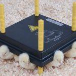 wp 25 warmteplaat voor kuikens
